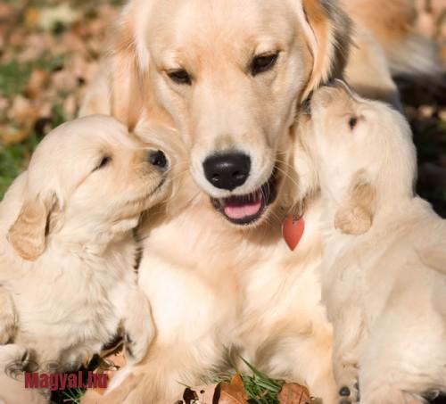 anyai szeretet