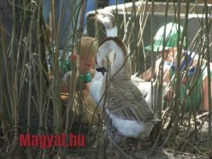 Gyerek sziget 2014 Állatsimogató
