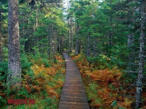wood-road